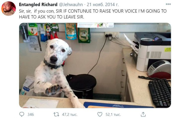 Funny tweet with a dog